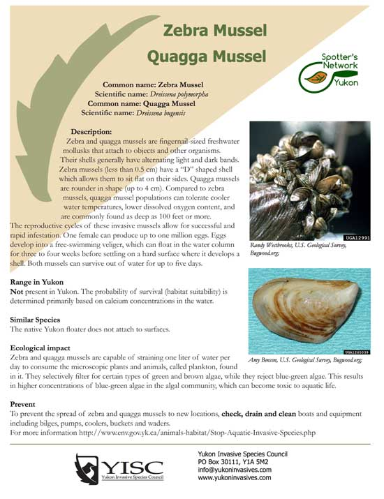 Zebra Mussel Facts