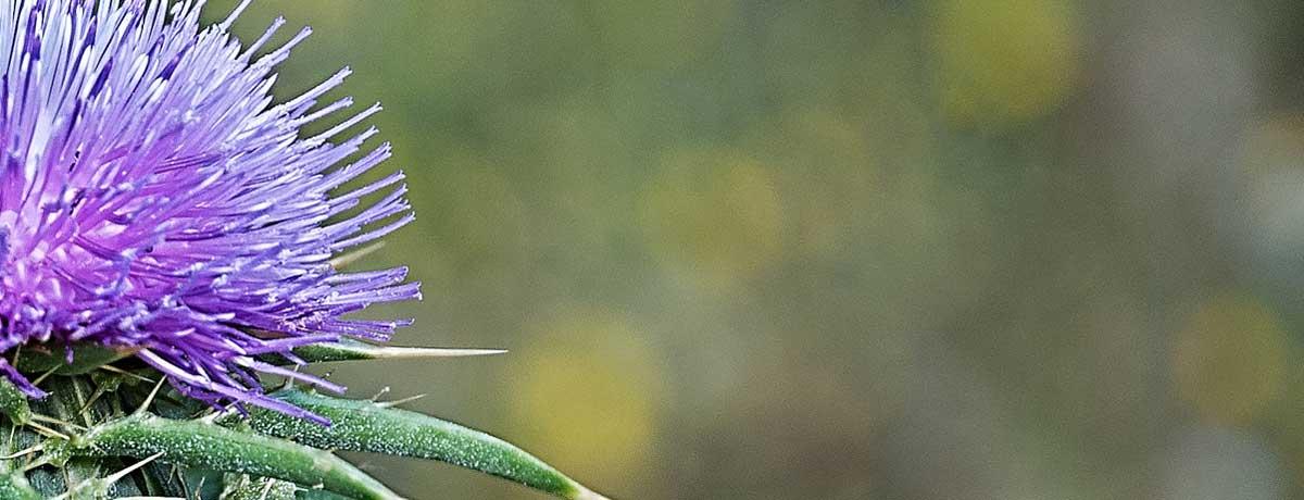 weed_closeup