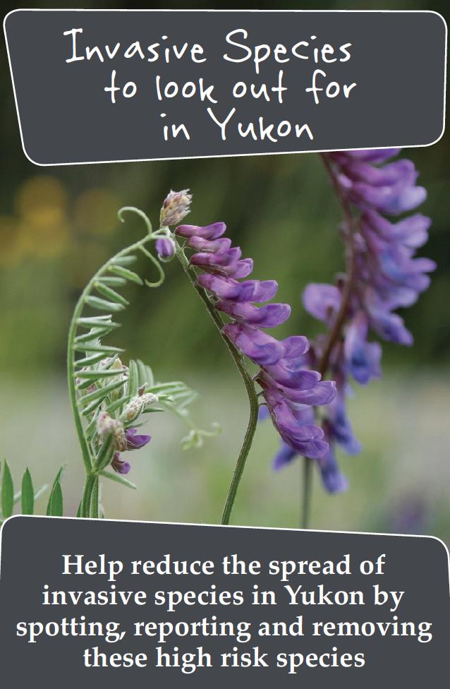 Yukon Invaders - selected species