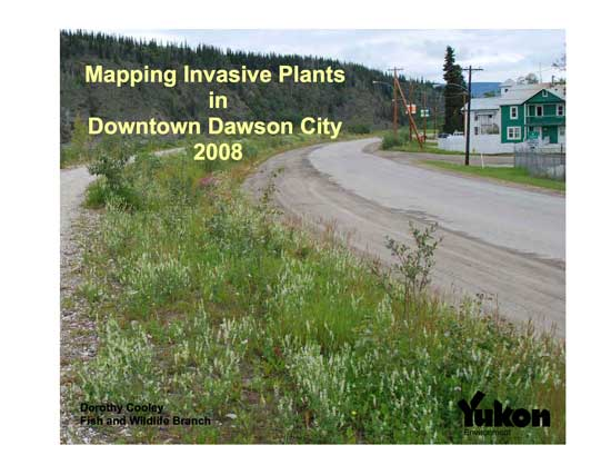 Dawson invasive plant survey 2008