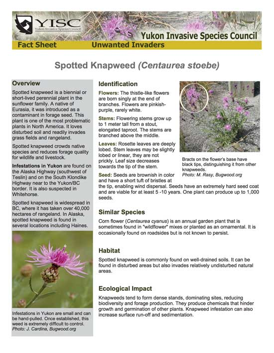 Spotted Knapweed Factsheet