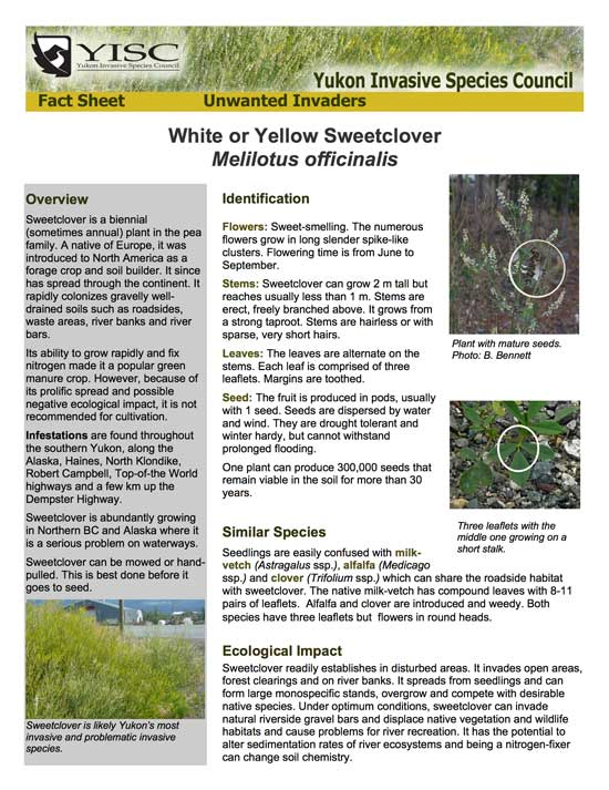 Sweetclover Factsheet
