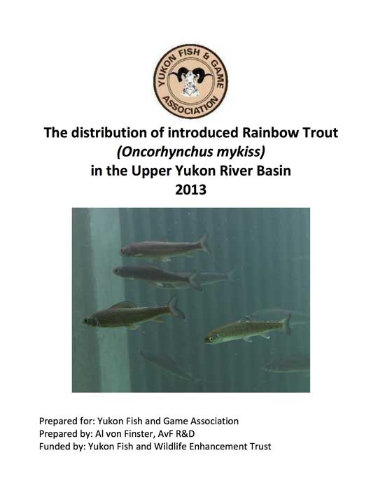 Rainbow Trout Yukon