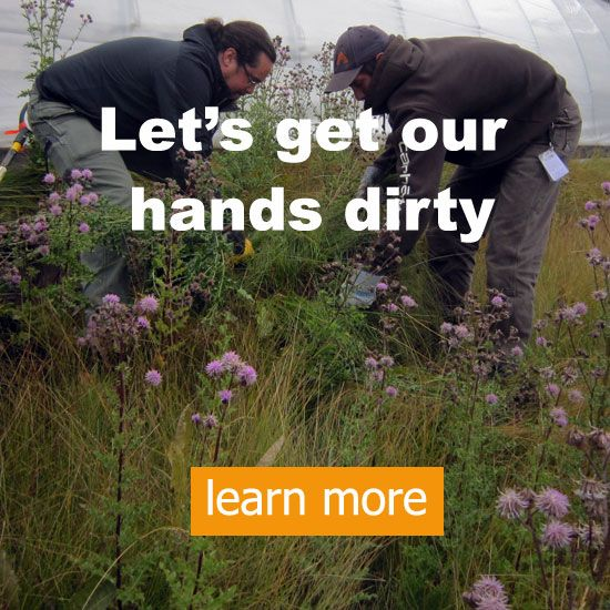 Let's get our hands dirty
